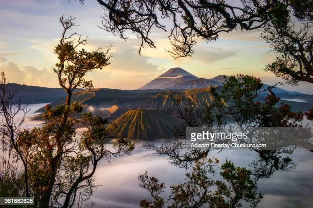mount bromo volcano (gunung bromo) with tree foreground,indonesia - tengger stock pictures, royalty-free photos & images