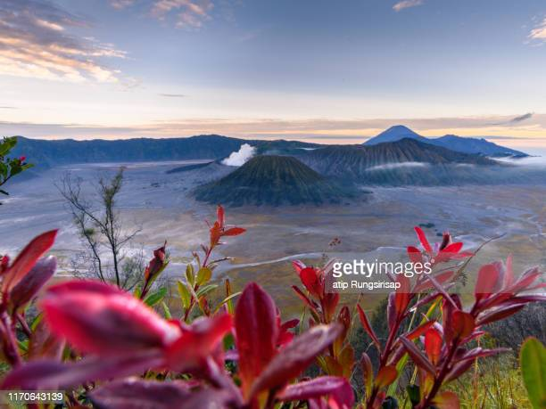 mount bromo,in east java, indonesia. - surabaya stock pictures, royalty-free photos & images