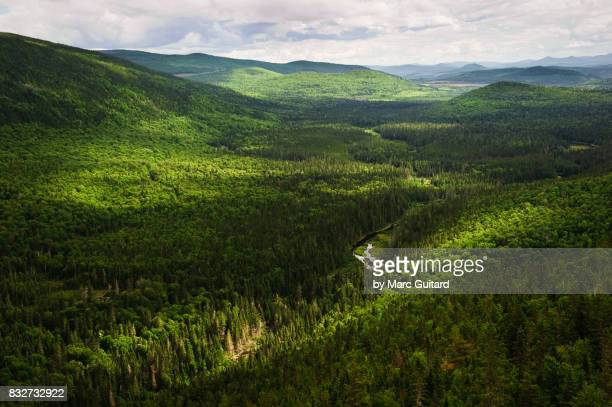 mount carleton provincial park, new brunswick, canada - new brunswick canada stock pictures, royalty-free photos & images