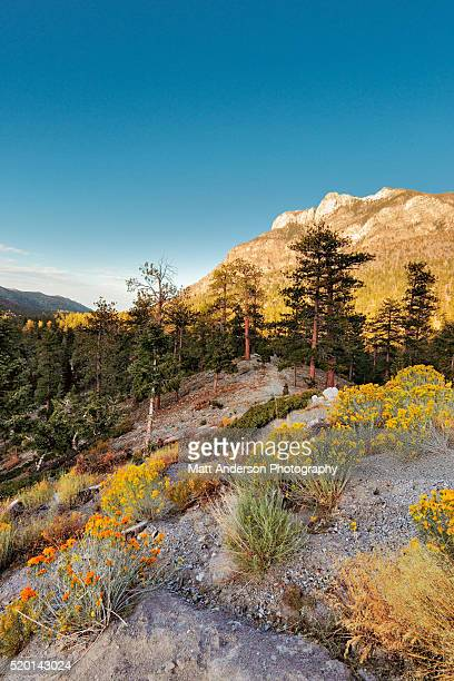 mount chareleston in fall - mt charleston stock photos and pictures