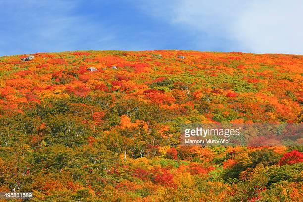 mount chokai, yamagata prefecture, japan - 山形県 ストックフォトと画像