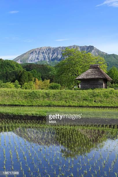 Mount Daisen and Rice Paddy, Kofu, Tottori, Japan