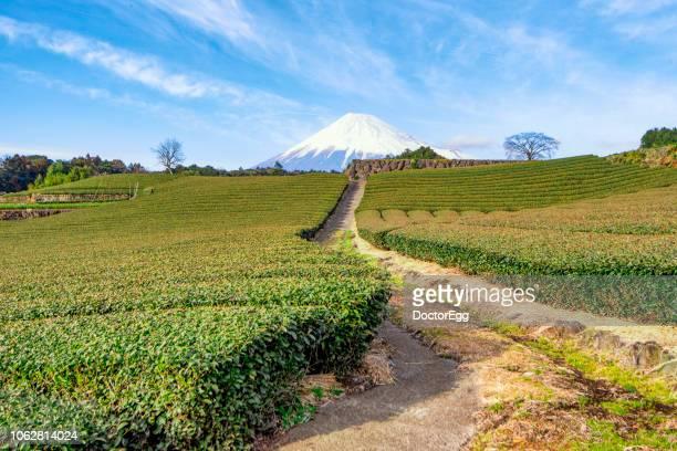 mount fuji and green tea plantation at shizuoka, japan - 静岡市 ストックフォトと画像