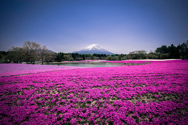 Mount Fuji Mos Phloxx