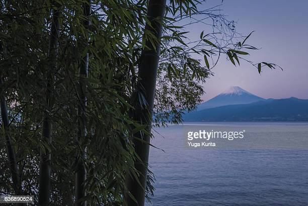 Mount Fuji over a Bamboo Forest and Surugabay