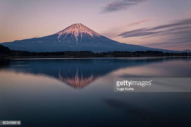 mount fuji reflected in lake tanuki - marderhund stock-fotos und bilder