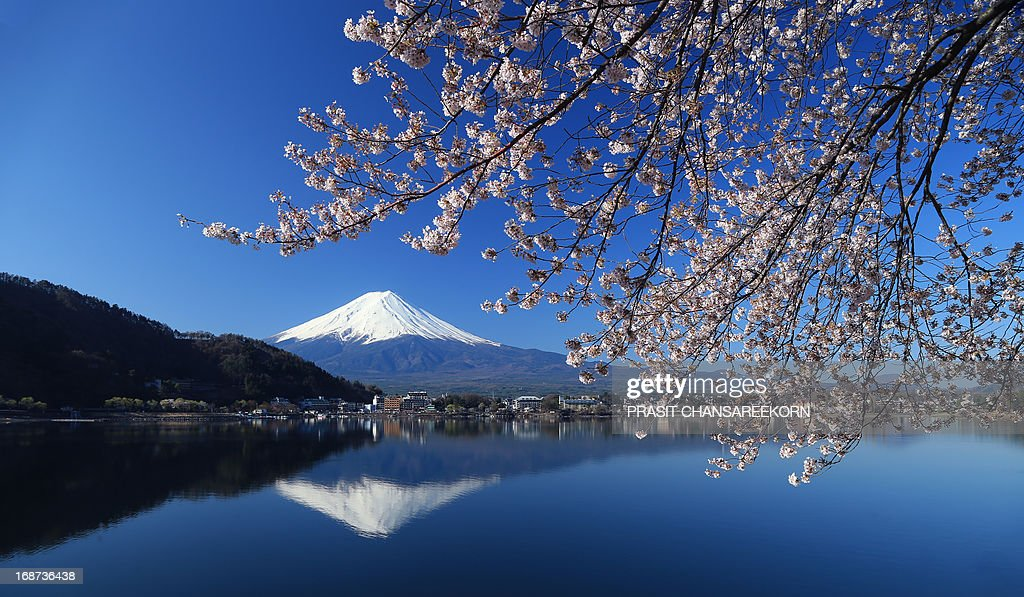 Mount Fuji seen throught cherry blossom : News Photo