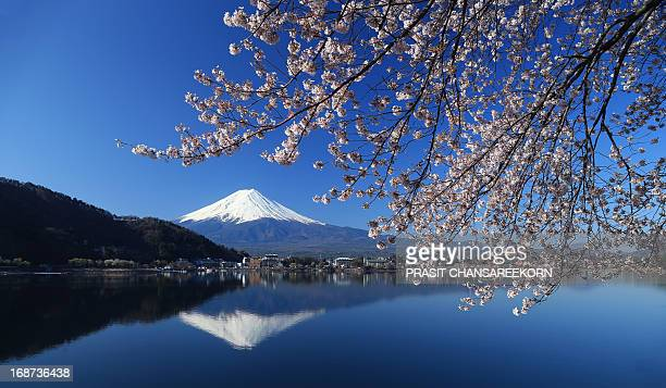 Mount Fuji seen throught cherry blossom, Lake Kawaguchi, Japan