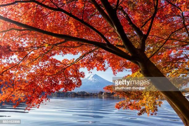 Mount Fuji with red maple leaves in Autumn season at Lake Kawaguchiko,Yamanashi,Japan.