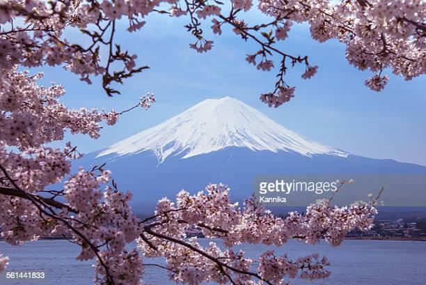 mount fuji with sakura - mt fuji stock photos and pictures