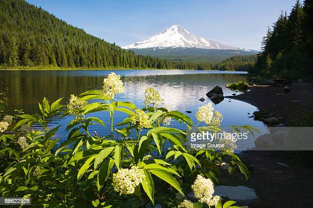 mount hood and trillium lake - mt hood national forest stock pictures, royalty-free photos & images