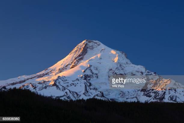 Mount Hood at sunrise from Lawrence Lake Mount Hood National Forest Oregon