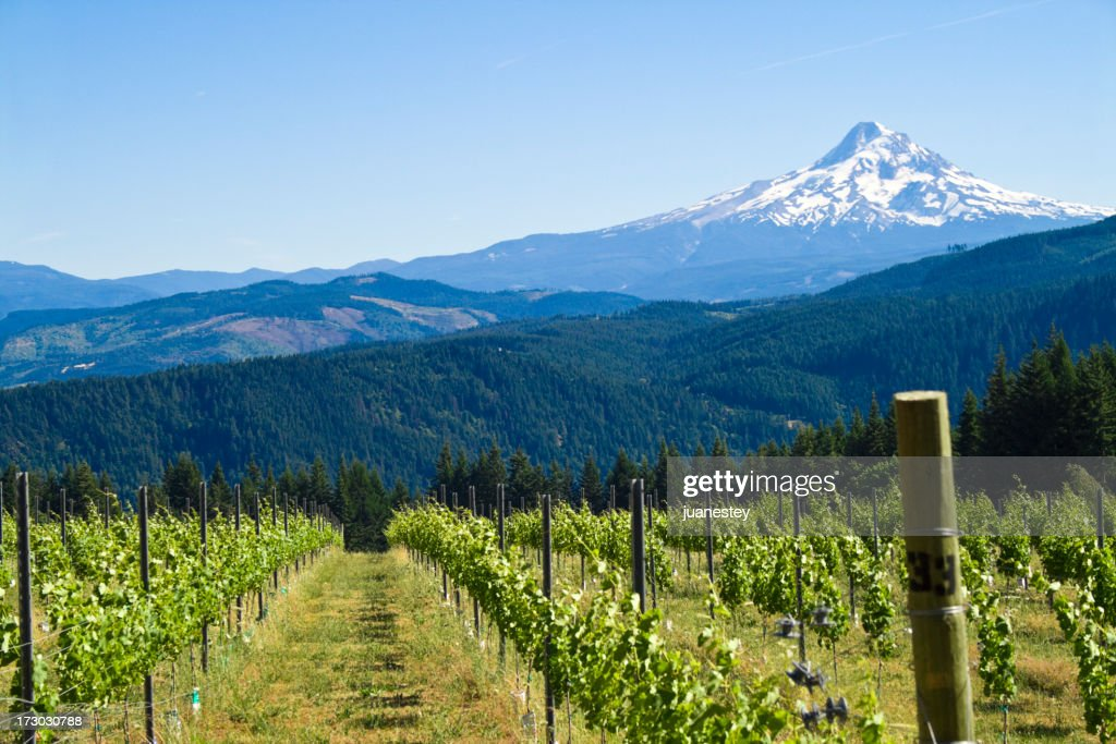 Mount Hood Harvest : Stock Photo