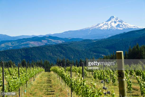 mount hood harvest - washington state stock pictures, royalty-free photos & images