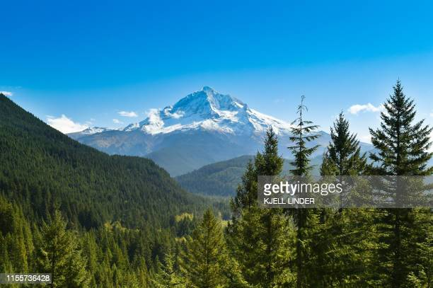 mount hood with pine trees - pine woodland stock pictures, royalty-free photos & images