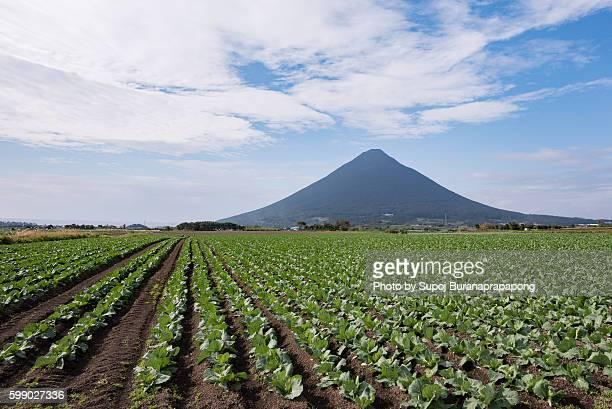 mount kaimondake in kyushu japan - 指宿市 ストックフォトと画像
