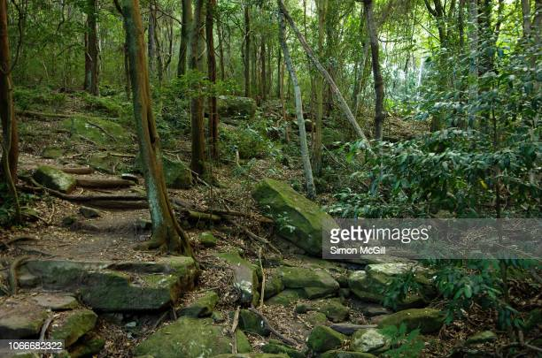 mount keira track, illawarra escarpment state conservation area, new south wales, australia - wollongong stock pictures, royalty-free photos & images