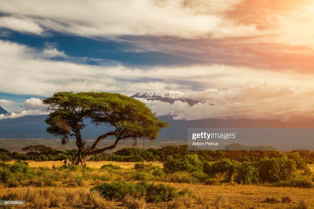 Mount Kilimanjaro, Amboseli, Kenya : Foto de stock