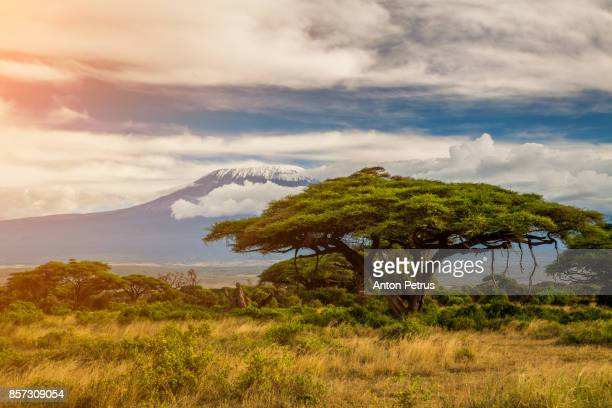 mount kilimanjaro, amboseli, kenya - kenya stock pictures, royalty-free photos & images