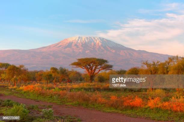 mount kilimanjaro with acacia - high dynamic range imaging - savannah stock photos and pictures