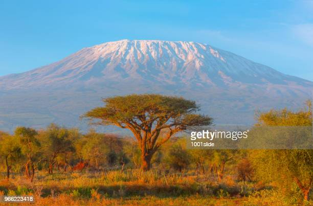 mount kilimanjaro with acacia - high dynamic range imaging - kenya stock pictures, royalty-free photos & images