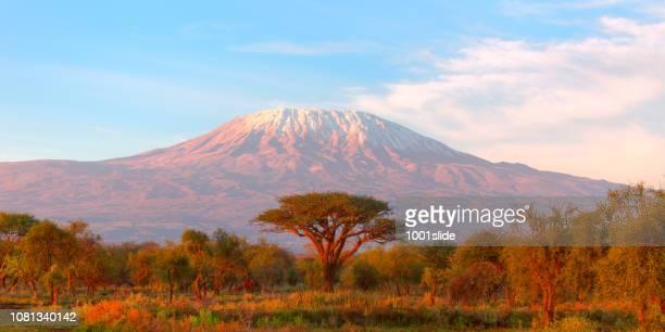 monte kilimanjaro con acacia - tanzania fotografías e imágenes de stock