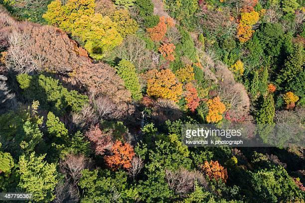 mount maya in autumn - kobe japan stock pictures, royalty-free photos & images