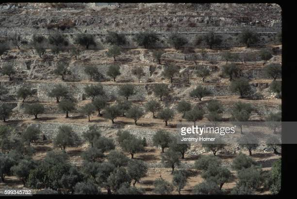 mount of olives - mount of olives stock pictures, royalty-free photos & images
