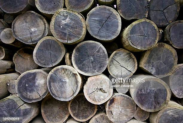 Logs cut for construction are stacked in a heaped rows to dry.
