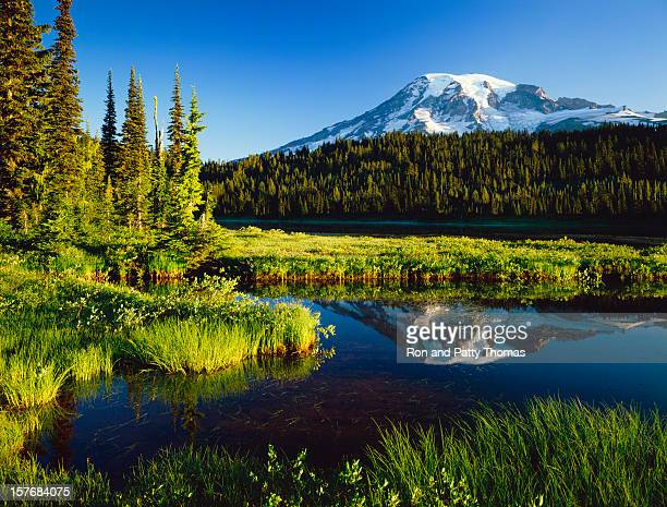 Mount. Rainier National Park