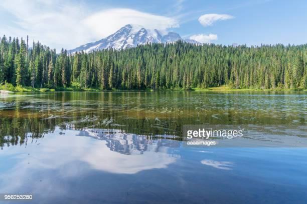 mount rainier national park - coniferous tree stock pictures, royalty-free photos & images