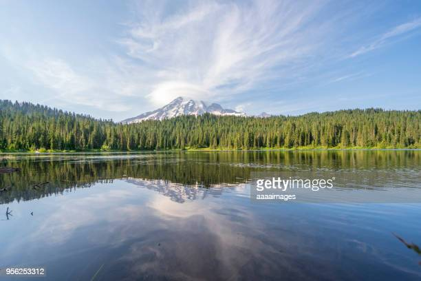 mount rainier national park - evergreen stock pictures, royalty-free photos & images