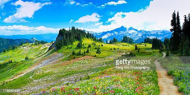 Mount Rainier summer colors