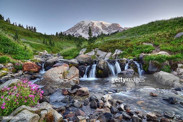 mount rainier summer - washington state stock pictures, royalty-free photos & images