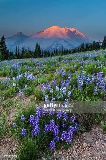 Mount Rainier sunrise at Yakima Park
