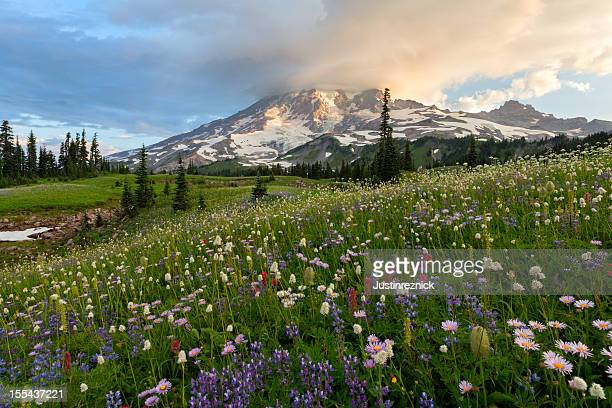 Mount Rainier Wildflowers Sunrise