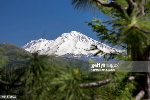 mount shasta through the trees - mt shasta stock pictures, royalty-free photos & images