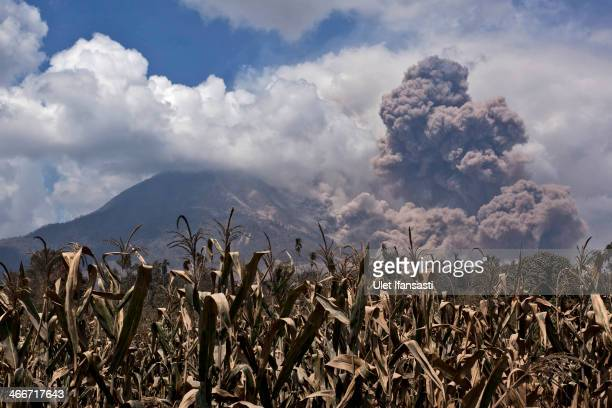 Mount Sinabung spews pyroclastic smoke seen from Payung village on February 03 2014 in Karo District North Sumatra Indonesia The number of displaced...