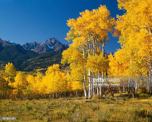 mount sneffels with autumn aspen trees - aspen tree stock pictures, royalty-free photos & images