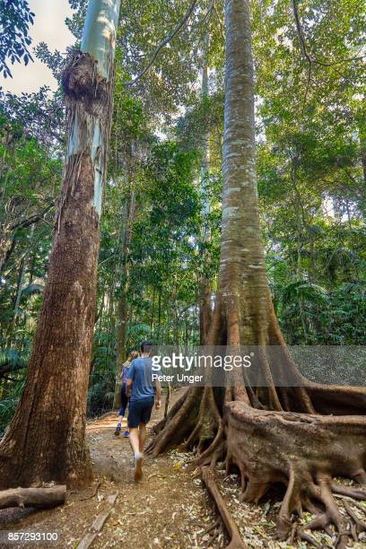 Mount Tamborine National park,Queensland,Australia