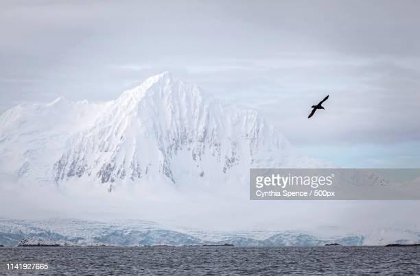 mount william, antarctica - 南極海 ストックフォトと画像