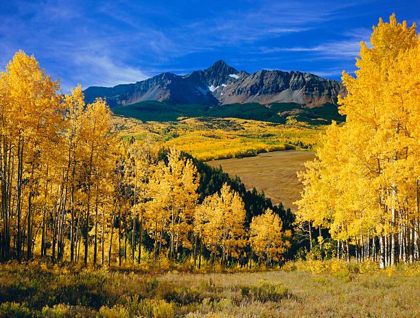 Mount Wilson With Autumn Aspen Trees Wall Art