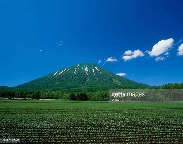 Mount Yotei and Field of Bean, Makkari, Hokkaido, Japan