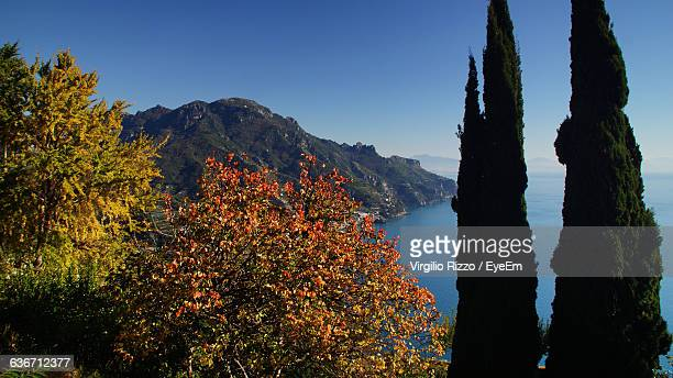 Mountain And Sea With Trees In Foreground