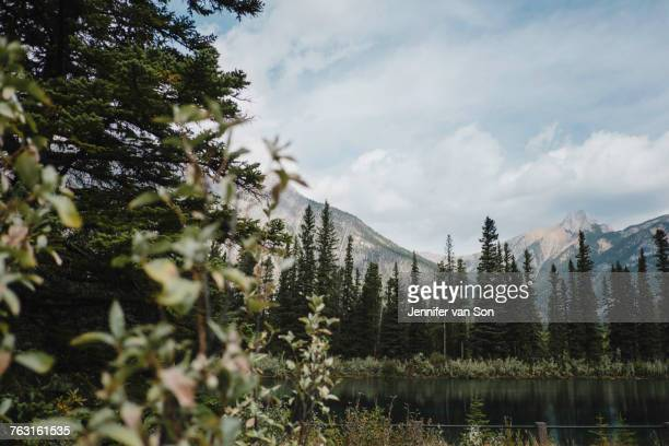 Mountain and trees, Canmore, Canada, North America