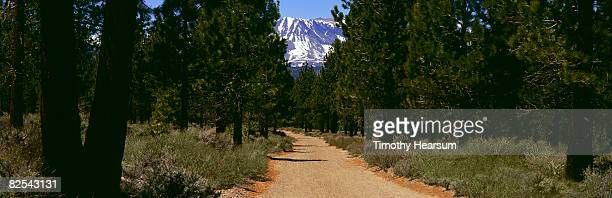 Mountain at end of road through forest