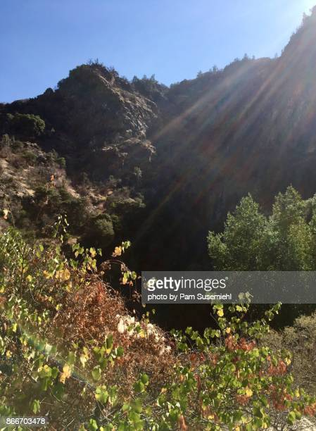 mountain autumn colors - sequoia national forest stock photos and pictures