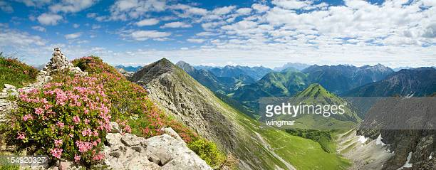 azalea- montagne, Alpes, Autriche tiro