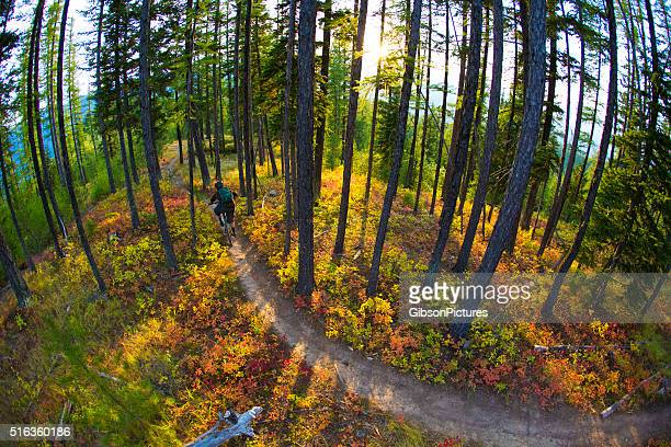 mountain bike canada - cross country cycling stock photos and pictures