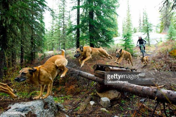 mountain bike dog jump - sequential series stock pictures, royalty-free photos & images